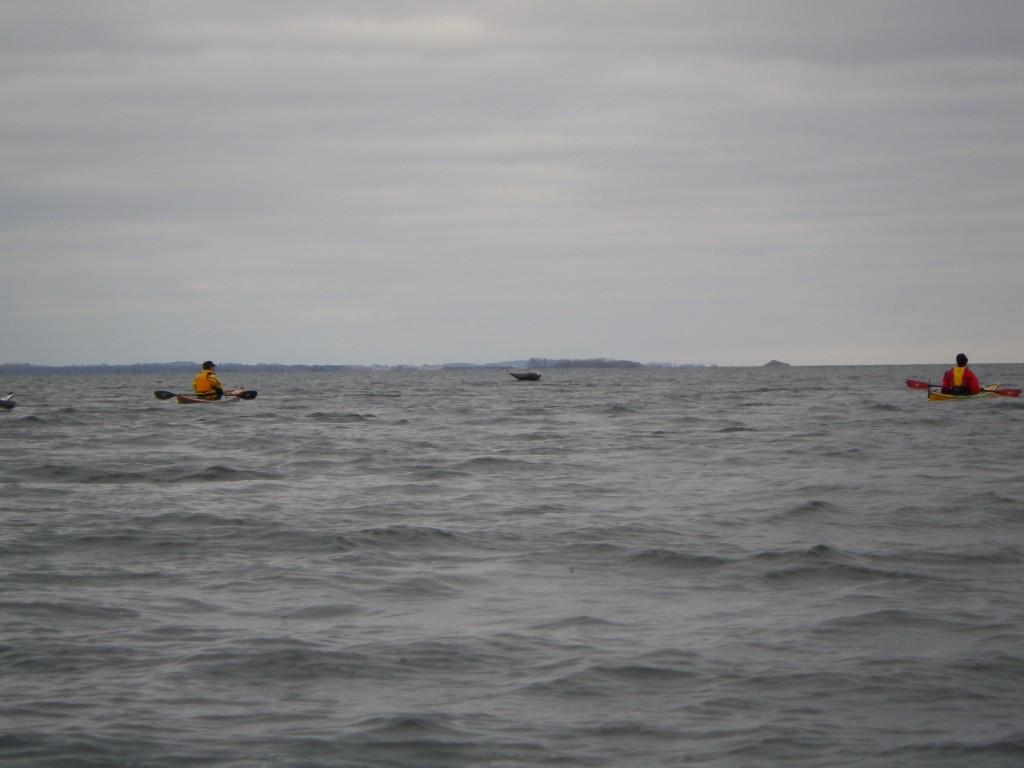 Sæler ved Stold